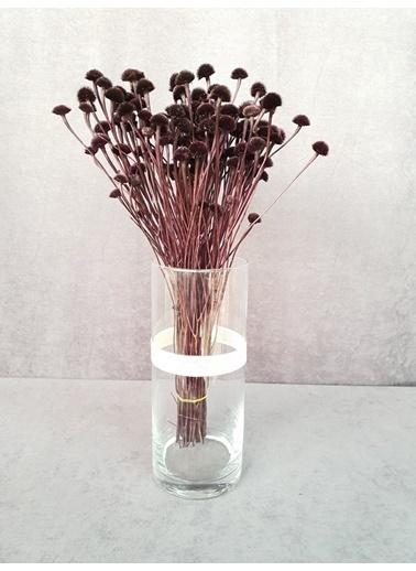 Kuru Çiçek Deposu Kuru Çiçek Papatya Otu 50 Cm Koyu Mor  Mor